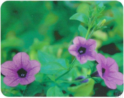 Коврик для мыши Buro BU-M20012 Цветы